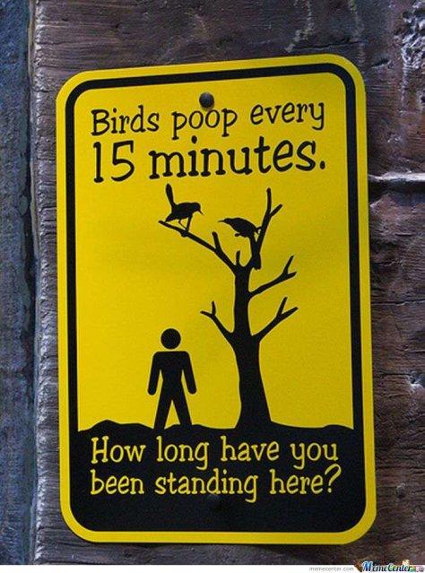 Birds-poop_o_115636