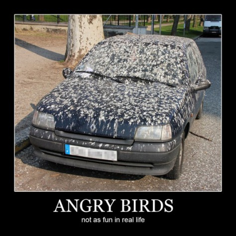 carquotes_angrybirds