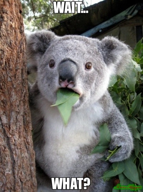 koala-eating-wait-what-meme