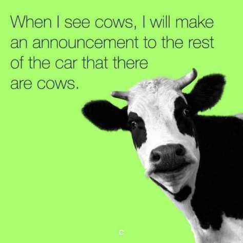 when-i-see-cows-i-will-make-an-announcement-to-the-rest-of-the-car-that-there-are-cows-nF9pX