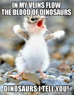 21f189e9f775e0abba4939cc01b6e5f2--funny-science-memes-funny-animal-memes