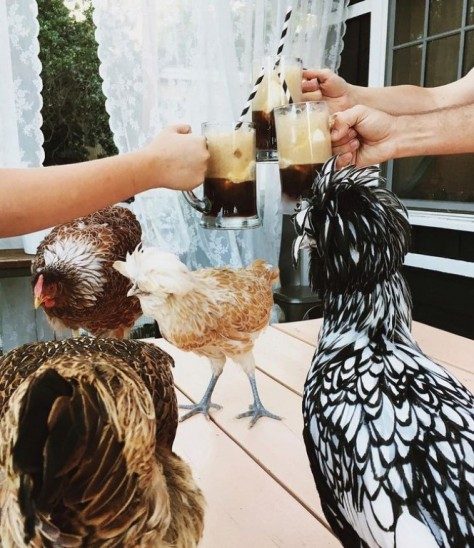 drinkingwithchickens-rootbeerfloats.jpg.653x0_q80_crop-smart