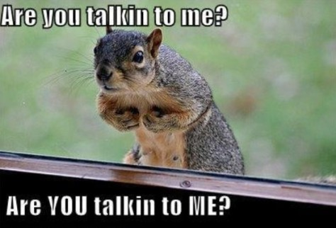 Are-You-Talikng-to-Me-Funny-Squirrel-Meme