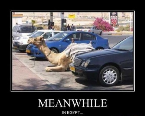camel-parking-your-argument-is-invalid_o_509937