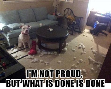 Im-not-proud