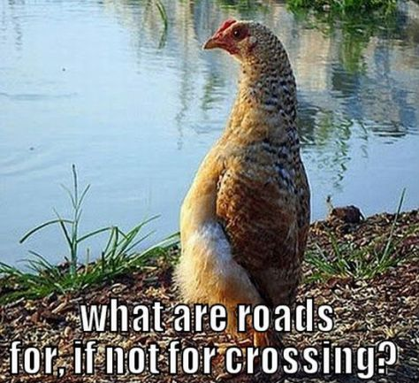 thoughtful-chicken-meme