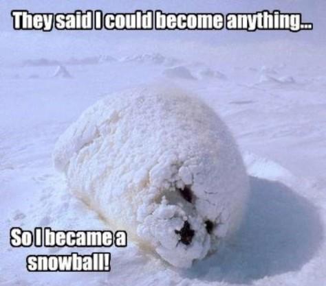 snowball-of-cuteness-W630