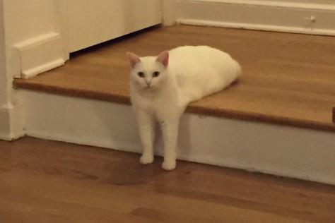 Cat7_w710_h473_2x