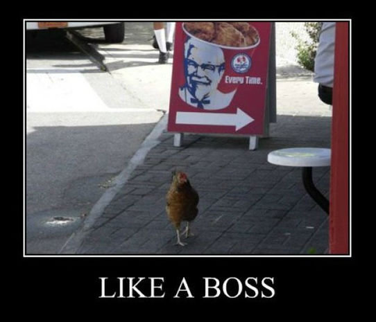Like+a+boss+somebody+called+him+chicken_b7adcb_4165676
