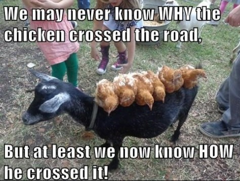 we-may-never-know-why-the-chicken-crossed-the-road-funny-meme-photo-1544396354p8c4l