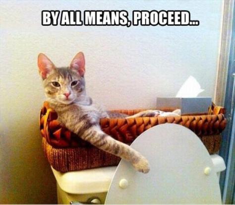 bathroom-cat