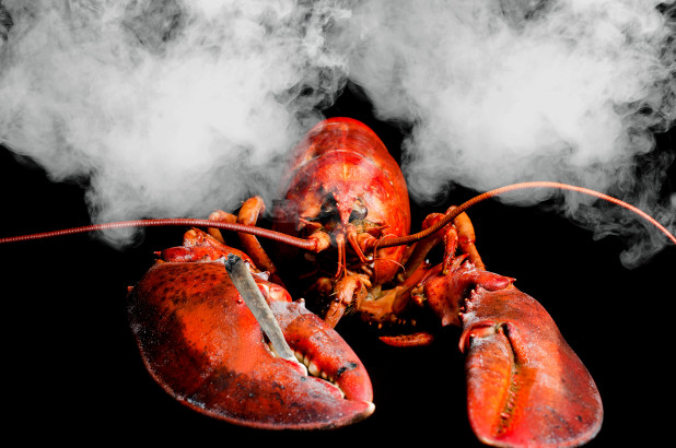 180918-marijuana-smoke-lobsters-feature-1