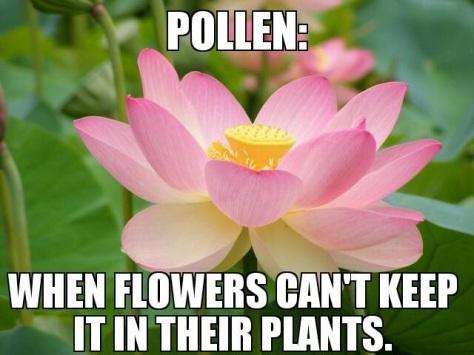 pollenhumor