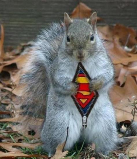 Super-Squirrel_o_27102