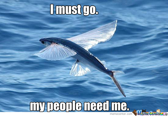 i-don-amp-039-t-give-a-flying-fish_o_1639057