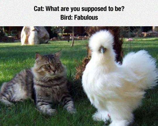 funny-cat-fluffy-bird-fabulous