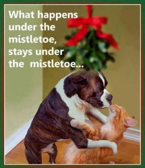 292238-What-Happens-Under-The-Mistletoe-Stays-Under-The-Mistletoe