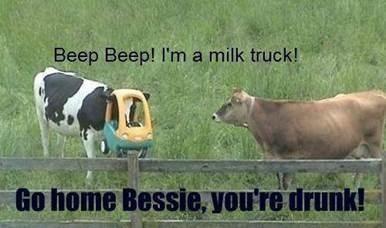 Beep-beep-im-milk-truck-go-home-bessie-youre-drunk-Cow-Meme