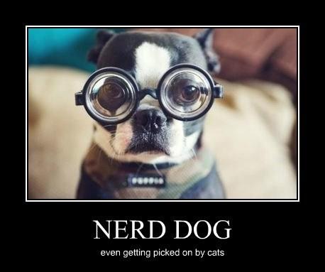 nerd-dog