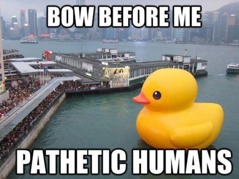 1533511253_big duck